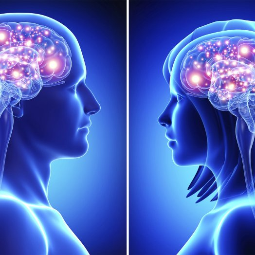 Cerveaux_féminin_et_masculin