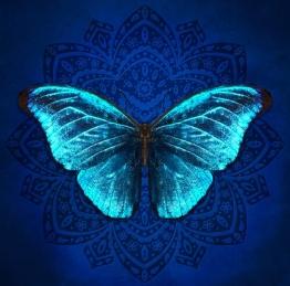 borboleta-butterfly-dalla-3.jpg
