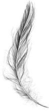 404e0d9ab1eee4e909029edaf91dcbb6-swimming-tattoo-feather-tattoo-design.jpg