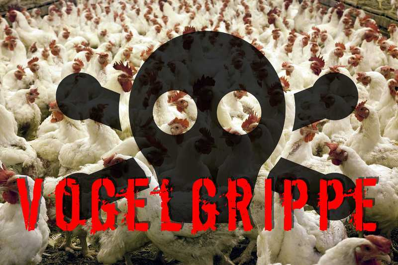 vogelgrippe-infos