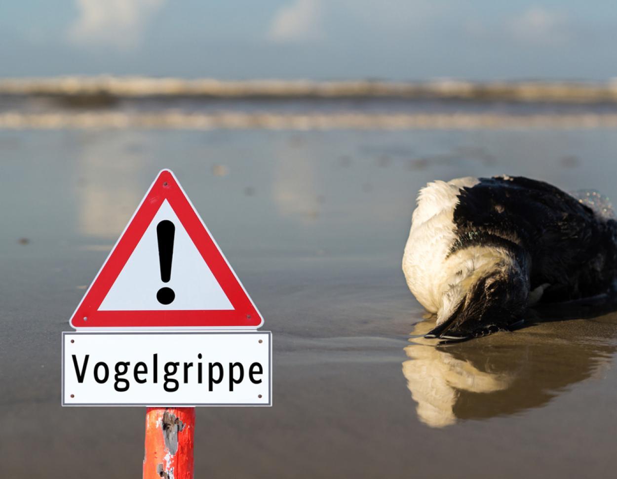 vogelgrippe-teaser