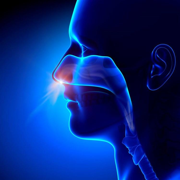 NaseGeruchssinn